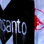 Tysiące pozwów przeciwko Monsanto za rakotwórczy glifosat